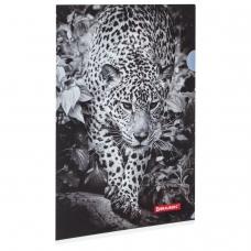 Папка-уголок BRAUBERG Леопард, А4, 150 мкм, цветная печать, 228040